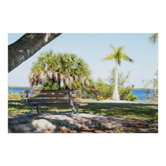 Palm trees roots Park bench Poster