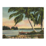 palm trees vintage postcard