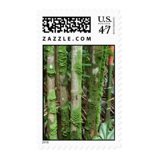 Palm Trunks Covered with Moss Postage