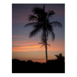 Palm Twilight Everglades National Park Postcard