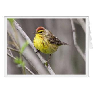 Palm Warbler Card