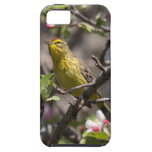 Palm Warbler iPhone 5 Cover