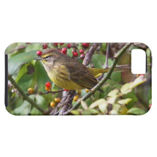 Palm Warbler iPhone 5 Covers