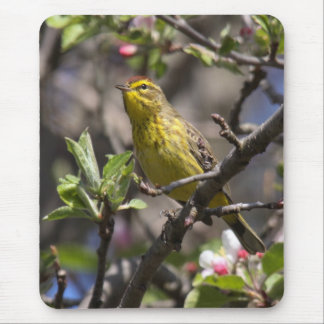 Palm Warbler Mouse Pad
