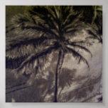 Palm Woods Print