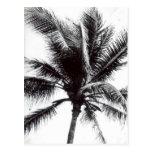 Palma blanco y negro postales