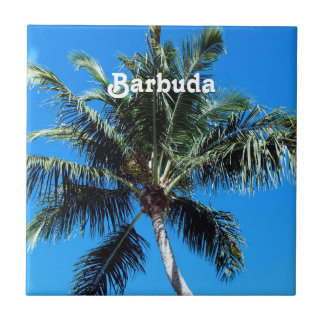 Palma de Barbuda Azulejo