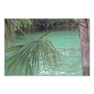 Palma de Blue Springs la Florida