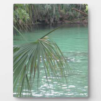 Palma de Blue Springs la Florida Placa Para Mostrar