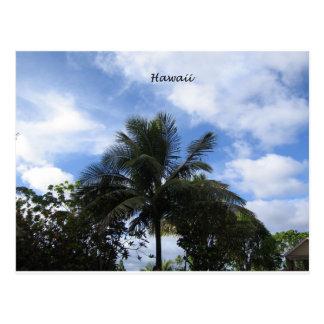 Palma de coco hawaiana postal