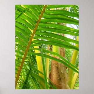Palma de coco impresiones