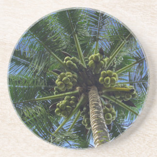 Palma de coco posavasos manualidades