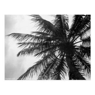 Palma de coco postales