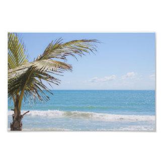 Palma de coco y fotografía azul de la playa del ma impresión fotográfica