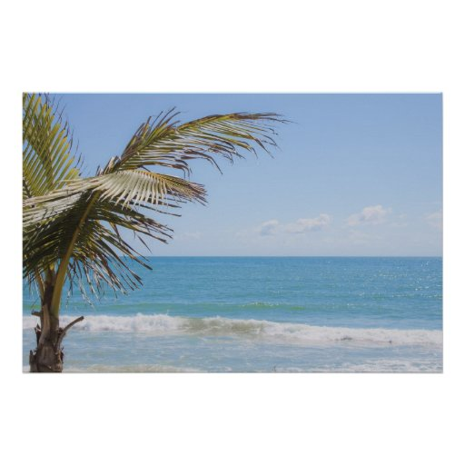 Palma de coco y fotografía azul de la playa del ma póster