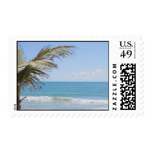 Palma de coco y fotografía azul de la playa del sello