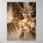 Palma de Key West - sepia Impresiones
