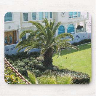 Palma en la costa CA Alfombrillas De Ratones