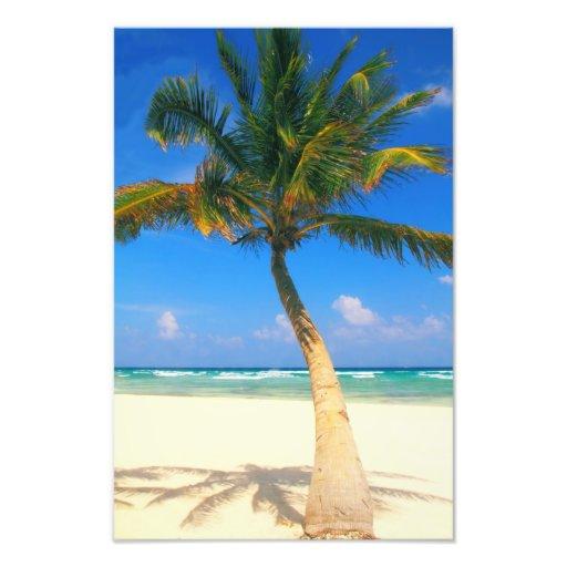 Palma en la playa arte fotográfico