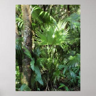 Palma hawaiana salvaje posters