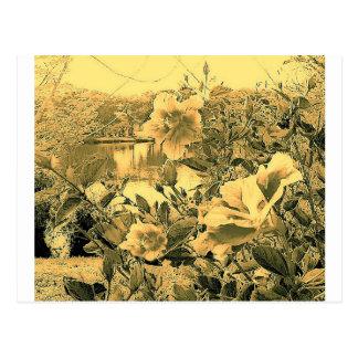 Palma Sola Botanical Garden Postcard