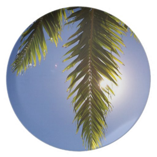 Palma soleada, Hawai'i Plato