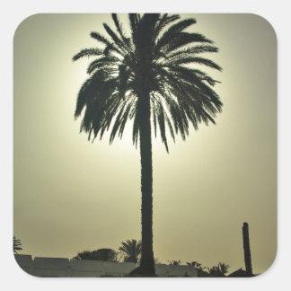 Palma soleada pegatina cuadrada