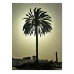 Palma soleada postal