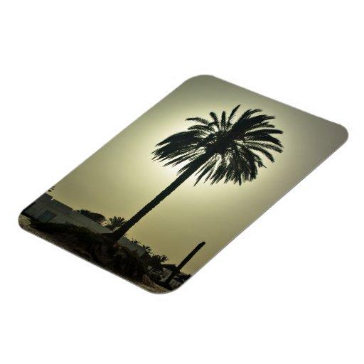Palma soleada rectangle magnet