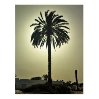 Palma soleada tarjetas postales