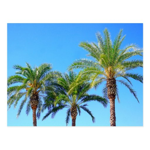 Palma triple tarjetas postales