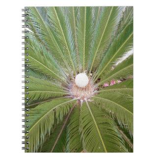 Palma verde fresca libretas