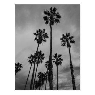 Palmas de B&W Los Ángeles Tarjetas Postales