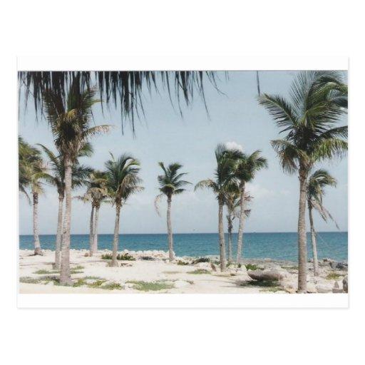 Palmas de Cancun Postal