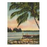 Palmas de coco del vintage tarjeta postal
