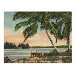 Palmas de coco del vintage tarjetas postales