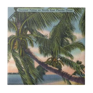Palmas de coco en la costa suroriental de la Flori