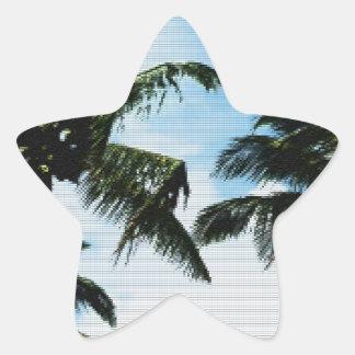 Palmas de coco pegatina en forma de estrella