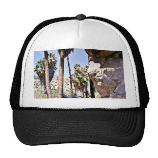 Palmas de fan de California, oasis perdido de las  Gorras