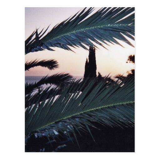 Palmas de la puesta del sol postal