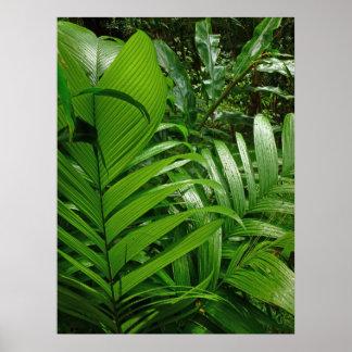 Palmas de la selva tropical poster