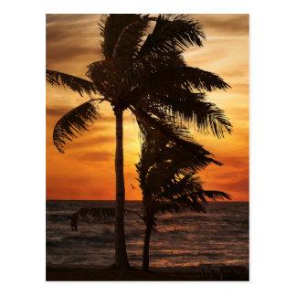 palmas de la silueta del paraíso tarjetas postales