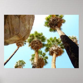 Palmas del oasis en parque nacional de la yuca póster