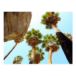 Palmas del oasis en parque nacional de la yuca tarjetas postales