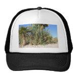 Palmas en la playa gorras de camionero