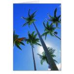 Palmas hawaianas felicitacion