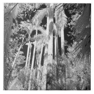 Palmas reales nativas en el filamento de Fakahatch Azulejo Cuadrado Grande