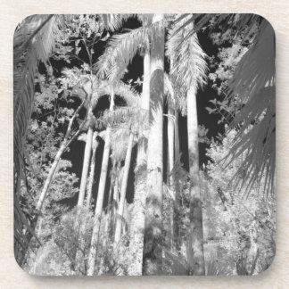 Palmas reales nativas en el filamento de Fakahatch Posavasos