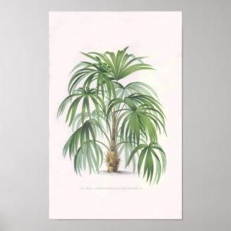 palmas tropicales, palmera póster