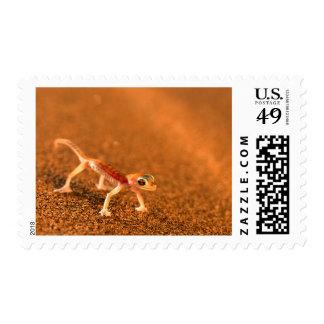 Palmatogecko On Sand Dune, Swakpomund, Erongo Postage Stamps